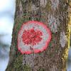 """""""Pink""""  lichen"""