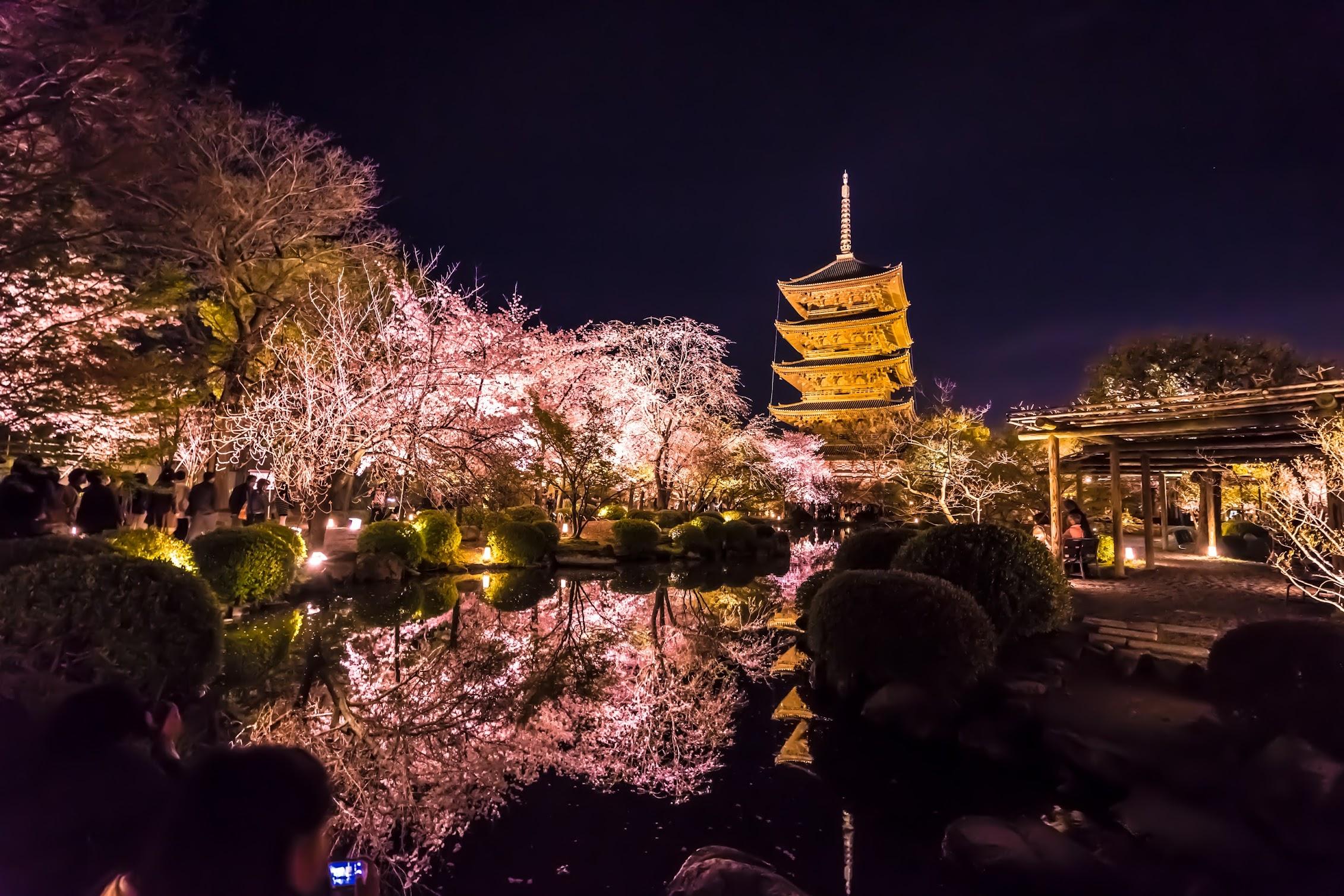 京都 東寺 桜 ライトアップ4