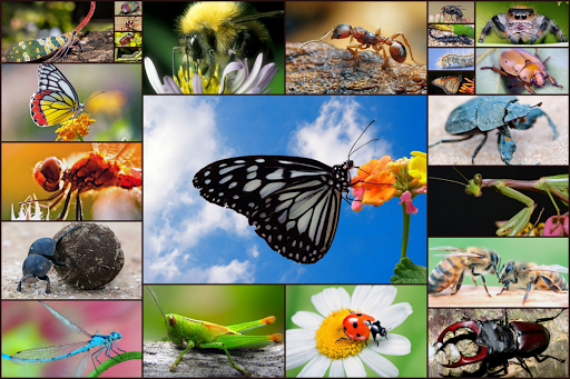 Insect Jigsaw Puzzles Game - For Kids & Adults ud83dudc1e 25.0 screenshots 1
