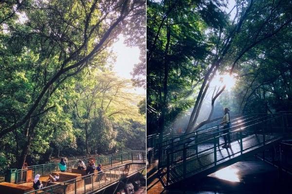 forest babakan siliwangi bandung