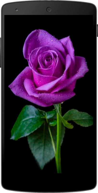 purple roses wallpapers  android apps on google play, Beautiful flower