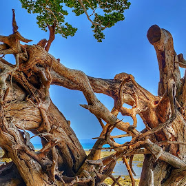 Roots by Vikas Jorwal - Nature Up Close Trees & Bushes ( sky, nature, dead tree, tree, nature up close,  )