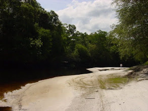 Photo: The dark color of the Satilla River's waters comes from tannic acid released by decomposing vegetation. The wetlands systems along the banks of the Satilla are extensive and play a big part in the filtration of water resources for Georgia.