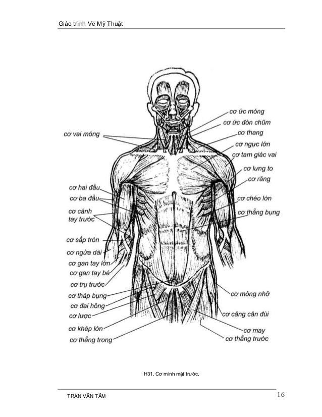 C:UsersG40-70Desktopmythuatarc.commythuatarcgiả phau cơcấu trúc cơ thểmy-thuat-1-16-638.jpg