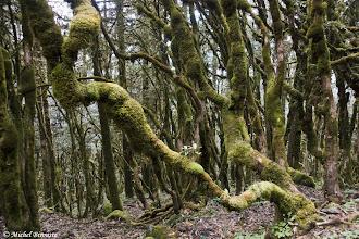 Photo: forêt vers Taksindu