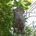 Warbler nest