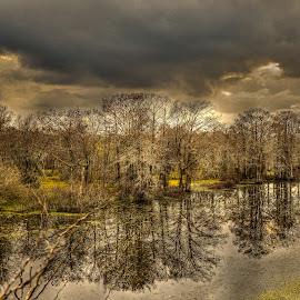Atchafalaya Basin by Ron Olivier - Landscapes Waterscapes ( atchafalaya basin,  )