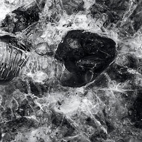 Under the Ice by Grace Harney - Black & White Macro ( ice, frozen,  )