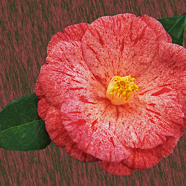 by Dee Haun - Artistic Objects Other Objects ( camelia, flowers, pink, 190224f7505ce2, single flower )
