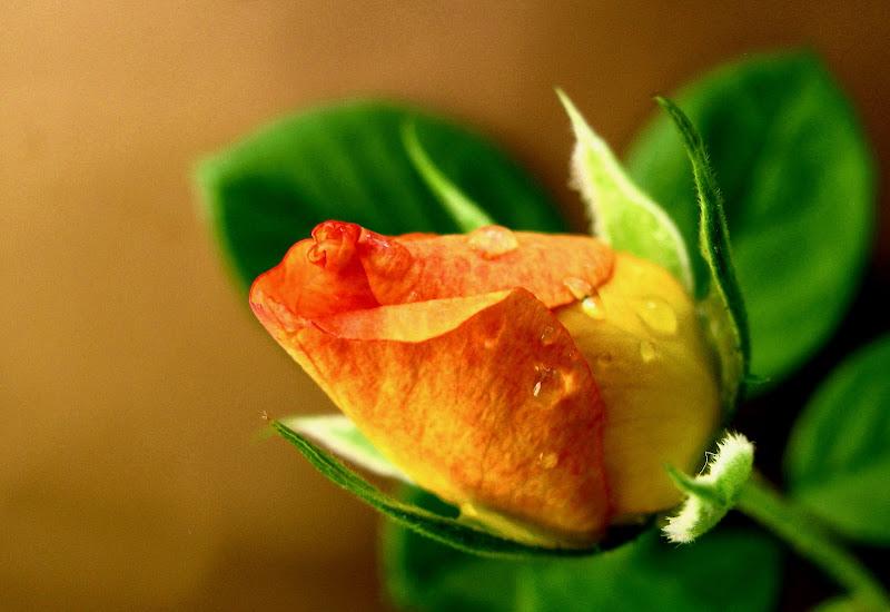 Orange Blooming di Elisabetta Di Girolamo