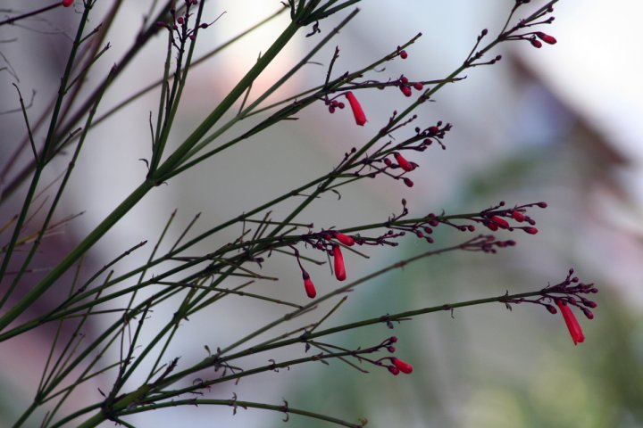 fiori appena sbocciati di primavera di stefynap