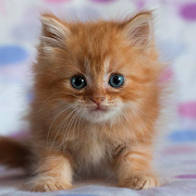 جذاب القطط خلفيات حية