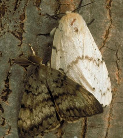 moth7