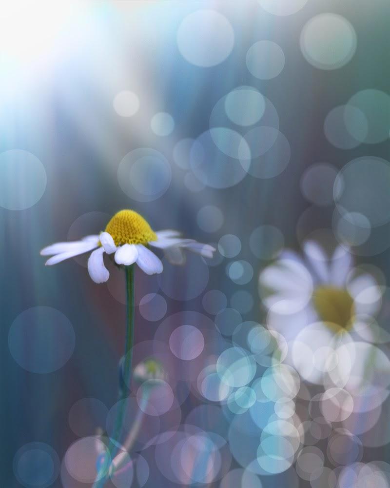 Fantasia di primavera di ClaudiaPi