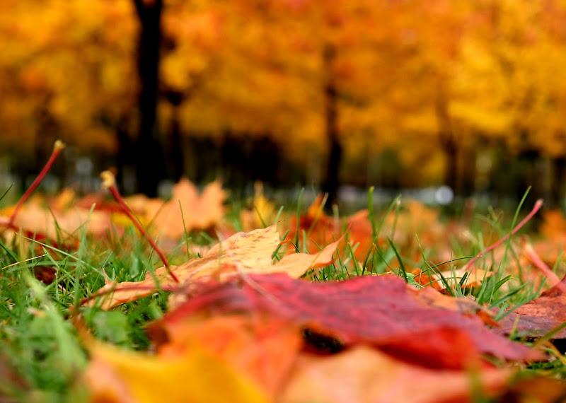 Un tappeto di foglie di Sinapsi