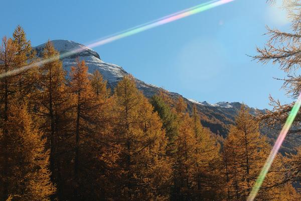 contrasti d'autunno di dodina77