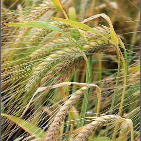 by Stuart Finley - Nature Up Close Leaves & Grasses
