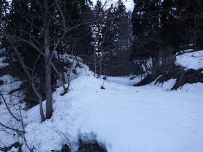 更に林道を進む