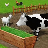 Livestock Fodder Growing Farm : Grow & Feed Cattle