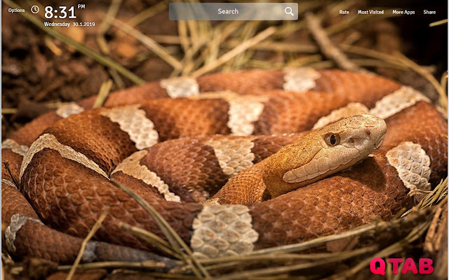 Snakes Wallpapers Snake New Tab