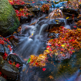 by Keith Sutherland - Nature Up Close Water ( water, red, park, flowing water, fall, leaves )