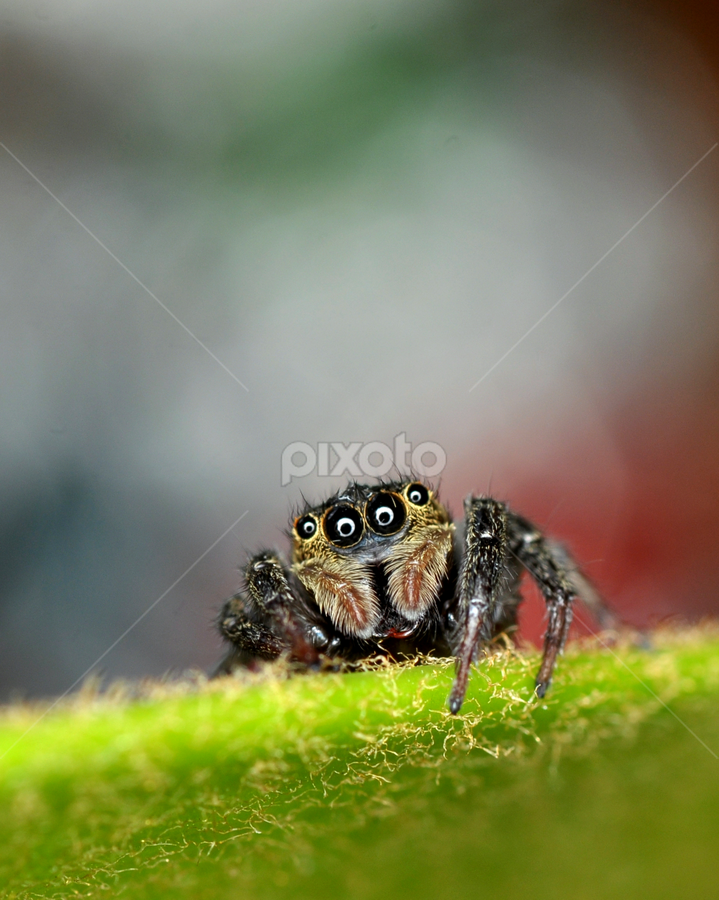 by Niney Azman - Animals Insects & Spiders