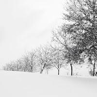 Dopo la nevicata di