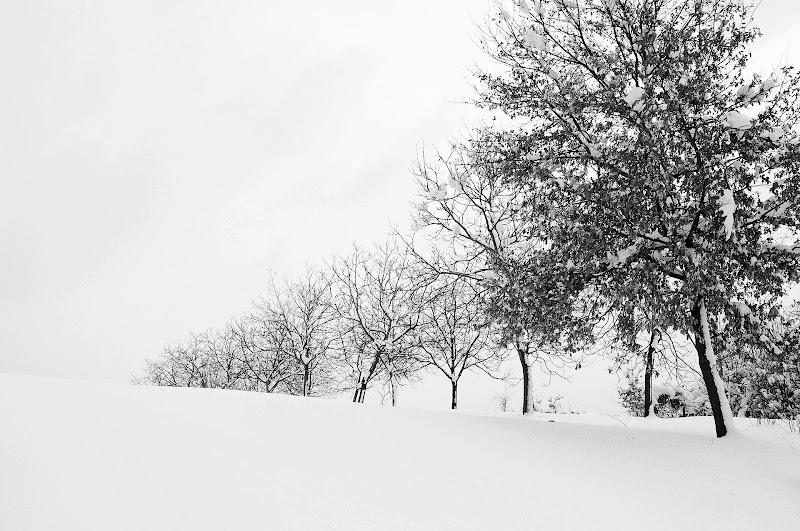 Dopo la nevicata di borik57
