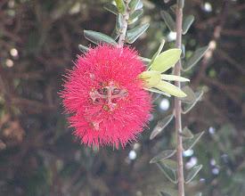 Photo: А вот и флора
