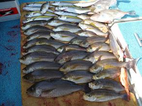 """Photo: こちらの釣果は""""タカオさん""""! 真鯛、クロは、入りませんでしたが ジャンボイサキ混じりました。"""