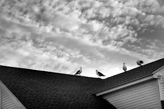Photo: Gathered to Meet the Morning