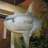三國一曼波魚餐廳