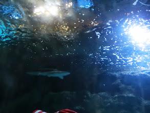 Photo: Shark Encounter