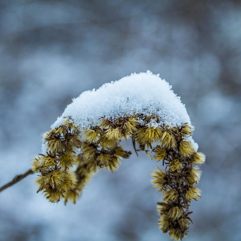 La bellezza della neve  di stefano_pandini
