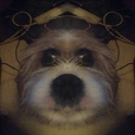 Symmetrical Selfie icon