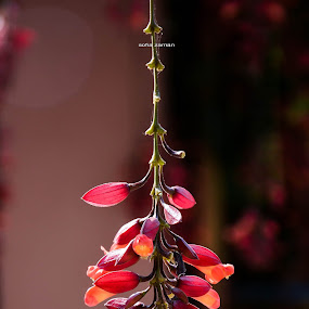 Flowers Pendulum. by Sofia Zaman - Flowers Flower Buds ( natural light, nature, purple flowers, bunch, flowers )