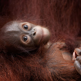 Safety of Mums Arms by Anne Young - Animals Other Mammals