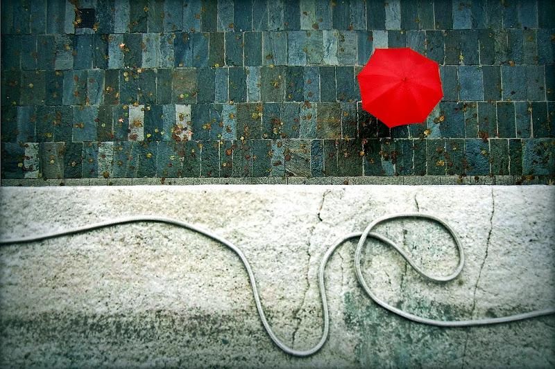 Umbrella di d