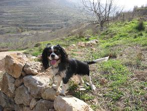 Photo: One year old, near Ein Lavan.