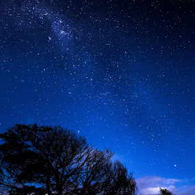 Milky way over tree by Gill Fry - Landscapes Starscapes ( milkyway, tree, night photography, stars, night, milky way,  )