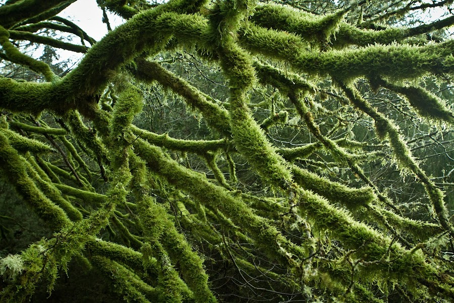 Backyard by Kyle Rea - Nature Up Close Trees & Bushes ( wall art, oregon, mountains, life, nature, tree, moss, pacific northwest, planet earth, luscious green yard,  )