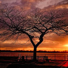 Burst of Energy by Linda Karlin - Landscapes Sunsets & Sunrises ( dramatic sky, sunset, tree, landscape )