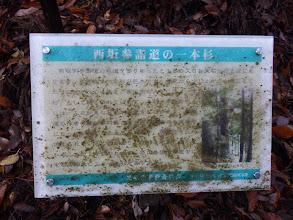 西坂参拝道の一本杉の説明文(汚れで読み辛く)