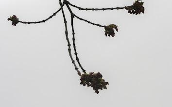 """Photo: Turda - Parcul grupului statuar """"Horea Closca si Crisan""""   2019.03.20"""