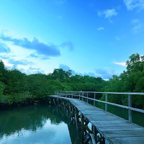 Mangrove Bridge by Putu Ekak - Landscapes Forests