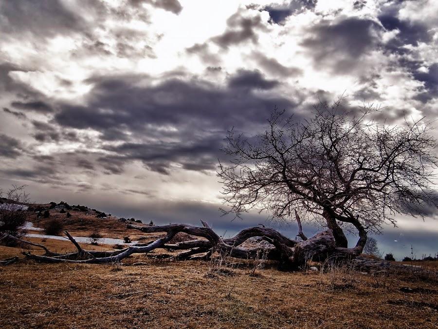 by Dajana Kulaš - Landscapes Prairies, Meadows & Fields