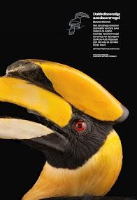 National Geographic Magazine NL- screenshot thumbnail