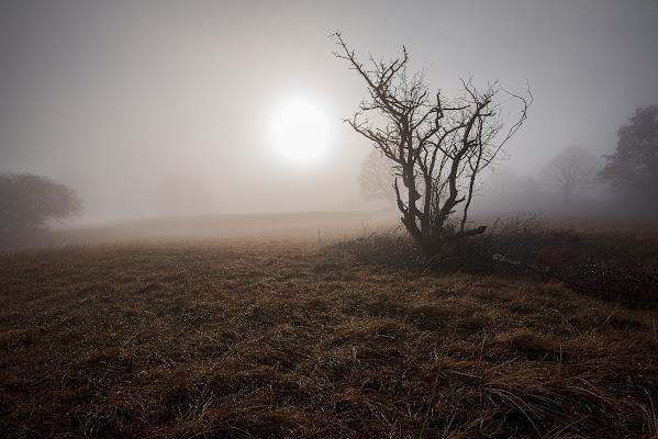 Strano, vagare nella nebbia... Ognuno è solo di FabiS