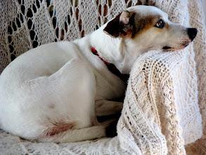 Photo: blanquita, formerly a cuban street dog