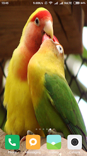 HD Parrot Wallpapers - náhled